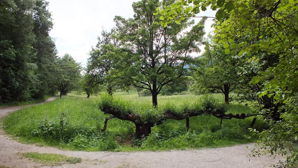 B_Treescape